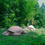 Ați văzut țestoase din astea în București?